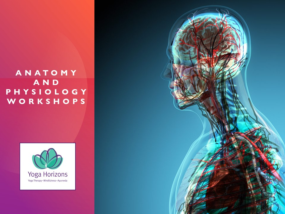 Anatomy and Physiology Workshops for Yoga Students
